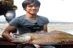 Người bắt được cá 'khủng' nghi cá sủ vàng tiền tỷ ở Nghệ An đã bán với giá 15 triệu đồng