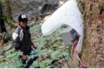Trộm 500 gốc sâm Ngọc Linh: Sử dụng chó nghiệp vụ, máy báo động bảo vệ vườn cây tiền tỉ