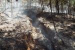 Cháy lớn thiêu trụi rừng thông, keo sắp thu hoạch
