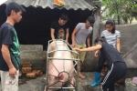Doanh nghiệp mua hết đàn lợn giúp người phụ nữ bị hắt dầu luyn