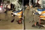 Video: Xe buýt đâm trực diện, voi chết tại chỗ