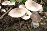 Ninh Thuận: Nấm độc tràn lan, nhiều trường hợp ngộ độc do nấm rừng