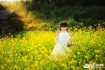 Nhóc tỳ xinh như thiên thần gây 'sốt' bởi loạt ảnh bên đồng hoa vàng