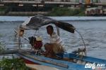 Chuyện cảm động đằng sau cuốn 'Nhật ký vớt xác người' trên sông Sài Gòn