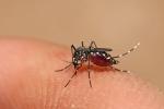 Hà Nội: Nữ sinh chết đột ngột do dịch sốt xuất huyết 'hoành hành'