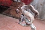 Rợn người cảnh nhện khổng lồ ăn thịt rắn độc nhất nhì thế giới