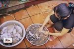 Thịt chuột săn ở bệnh viện, cống rãnh vào nhà hàng thành... dúi nuôi