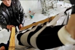 Nông dân Trung Quốc chế giường có khả năng chữa sỏi thận
