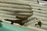 Hà Nội: Trèo qua lan can, học sinh lớp 4 rơi từ tầng 3 xuống đất