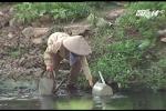 Kinh hãi vườn rau xanh non, tươi tốt được tưới bằng nước sông Tô Lịch