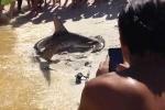 Video: Đỡ đẻ cho cá mập búa ngay trên bãi biển
