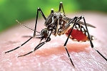 Chào buổi tối: Quay cuồng trong dịch bệnh sốt xuất huyết