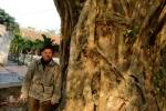 Kinh ngạc 'rừng cổ thụ' khổng lồ từ thời Trần ở ngoại ô Hà Nội