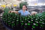 Sabeco thu hơn 75 tỷ đồng mỗi ngày từ bán bia
