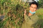 Sinh viên Học viện An ninh 'đội nắng' gặt lúa giúp dân Hà Nam