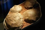 Phát hiện hóa thạch trứng khủng long trong công trình xây dựng