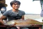 Người bắt được cá 'khủng' nghi cá sủ vàng ở Nghệ An: Ai trả 500 triệu đồng tôi sẽ bán