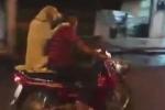 Video chó ngồi sau xe máy như người gây 'bão' mạng