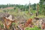 Nghe tin đồn sắp mở đường cao tốc, ồ ạt phá rừng để chiếm đất