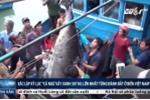 Mục sở thị 'thủy quái' khủng nhất Việt Nam