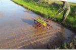 Anh nông dân và chiếc máy cấy không động cơ kỳ lạ ở Thái Bình