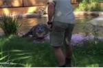 Ăn vật thể lạ du khách ném ra, cá sấu khổng lồ hóc nghẹn