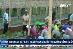 Indonesia bắt 4 người Trung Quốc trồng 'vũ khí sinh học' gần thủ đô Jarkarta
