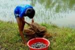 Ảnh: Sau bão số 2, dân Hà Tĩnh đổ xô vượt lũ căng lưới bắt cá