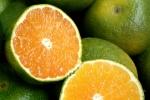 Chế tạo màng sinh học PVA bảo quản cam tươi lên tới 20 ngày