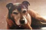 Video: 'Hồn ma' chú chó đã chết quanh quẩn trong nhà cũ