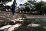 Cá chết trắng hồ Hoàng Cầu: Chủ tịch Hà Nội chỉ đạo cứu cá ngay trong đêm