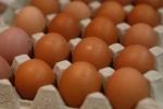 Hậu quả khủng khiếp của việc ăn kiêng hoàng gia, 9 quả trứng một ngày