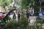 Cây xanh gãy đổ ở Hà Nội, hàng chục người chờ đèn đỏ thoát nạn
