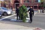Người đàn ông bị bắt vì cải trang thành cây xanh, cản trở giao thông