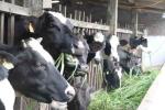 Ông Đinh La Thăng xuống làm việc, nông dân Củ Chi bán được sữa bò
