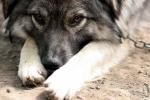 Chú chó ủ ấm cho bé trai bị mẹ bỏ rơi trong giá rét - 12 độ C