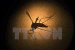 Mỹ: 75 tình nguyện viên thử nghiệm vắcxin phòng ngừa virus Zika