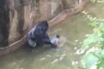 Clip: Thót tim cảnh khỉ đột tóm lấy bé 4 tuổi, lôi đi quanh rãnh nước