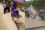 Video: Nhóm phụ nữ, trẻ em dựng lán chặn đường 'xin đểu' tiền lái xe chở lợn