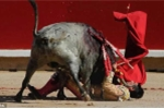 Đấu sĩ Tây Ban Nha bị bò húc đến chết ngay trên sóng truyền hình