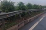 Trâu bị tông chết trên cao tốc TP.HCM - Long Thành - Dầu Giây - ảnh 1