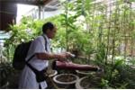 Vì sao Hà Nội phun thuốc diệt muỗi liên tục, sốt xuất huyết vẫn không hạ nhiệt?