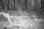 Phê ma túy, người đàn ông 'hóa' hổ, chạy 25 km dọc biên giới Séc-Ba Lan