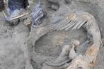 Phát hiện xác voi ma mút 30.000 năm