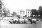 Những chuyện khó tin về cuộc sống của Tổng thống Mỹ trong Nhà Trắng