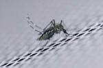 WHO gỡ bỏ tuyên bố Zika là tình trạng khẩn cấp toàn cầu