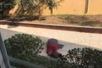 Người đàn ông nước ngoài nhảy từ tầng 5 Học viện Ngân hàng