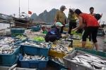 Thủ tướng ban hành định mức bồi thường thiệt hại cho ngư dân miền Trung