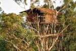 Kỳ dị bộ lạc duy nhất trên thế giới sống ở trên cây