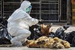 Bộ trưởng Cao Đức Phát sốt ruột vì virus cúm